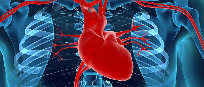 engordar-disminuiria-funcion-del-corazon
